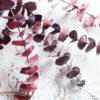 Preserved Frosted Natural Eucalyptus - Lá bạch đàn
