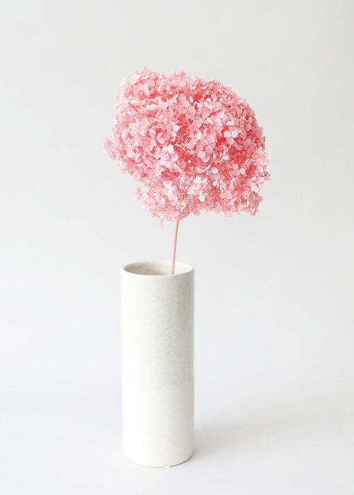 Hoa cẩm tú cầu màu hồng bảo quản - Pink Preserved Hydrangea