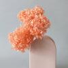 Hoa cẩm tú cầu hồng cam bảo quản – Pink Preserved Hydrangea