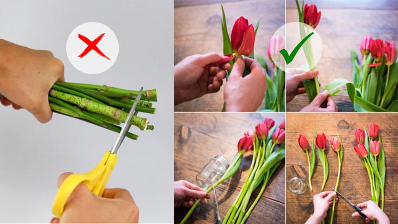 Bí Quyết: Cách giữ hoa tươi lâu khi cắm